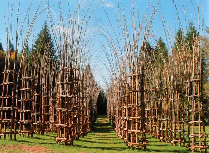 La cattedrale vegetale del Parco delle Orobie (Prealpi Bergamasche)